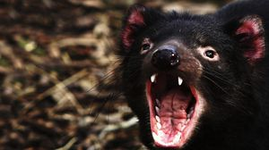 Preview wallpaper wolverine, teeth, anger, muzzle