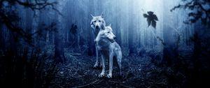 Preview wallpaper wolves, predators, forest, photoshop