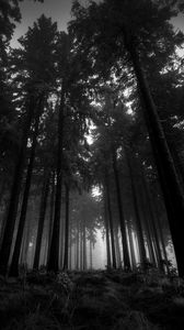 Preview wallpaper wood, black-and-white, from below, trees, gloomy, kroner, fog, silence