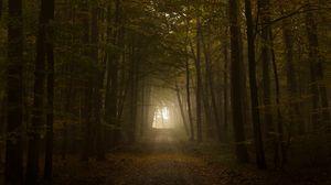 Preview wallpaper wood, fog, trees, road, autumn, light
