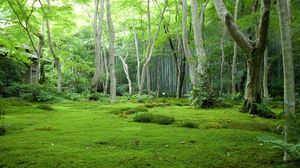 Preview wallpaper wood, grass, trees, house, moss, glade