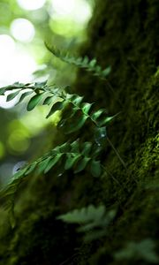 Preview wallpaper wood, leaves, nature, close-up