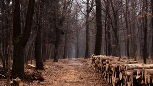 Preview wallpaper wood, logs, firewood, trees, autumn, stubs