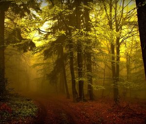 Preview wallpaper wood, track, haze, fog, trees, young growth, mysterious