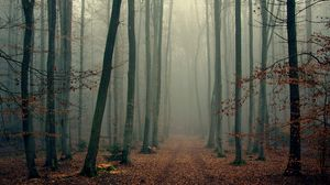 Preview wallpaper wood, trees, fog, foliage, autumn, cool