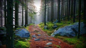 Preview wallpaper wood, trees, path, stones, branches, boughs, haze, moss, dampness
