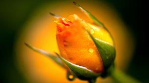 Preview wallpaper yellow, rose, bud, macro, drops, water, dew