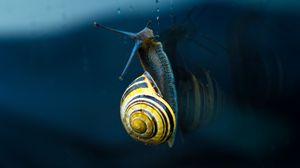Preview wallpaper snail, mollusc, spiral, mollusc shell