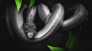 Preview wallpaper snake, photoshop, leaves, eyes, reptile