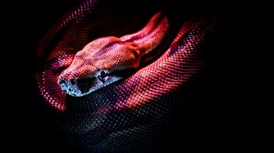Preview wallpaper snake, reptile, red, dark, scales