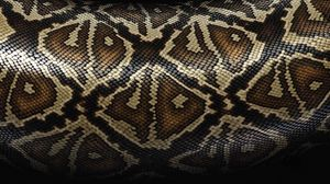Preview wallpaper snake, scales, patterns, texture