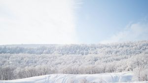 Preview Wallpaper Snow Trees Sky