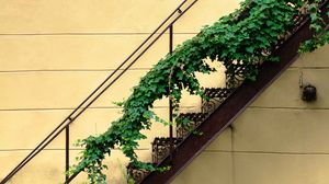 Preview wallpaper stairs, plant, wall, minimalism