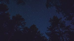 Preview wallpaper starry sky, bottom view, night, trees, tops, stars