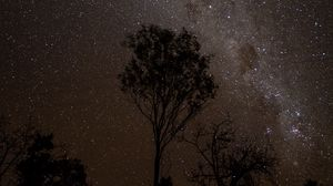 Preview wallpaper starry sky, night, milky way, trees, outlines, stars