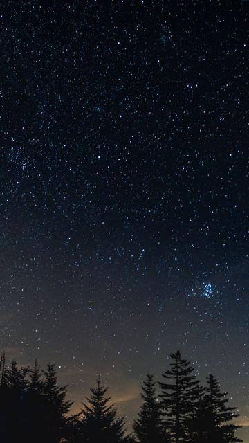 360x640 Wallpaper starry sky, night, trees, night landscape