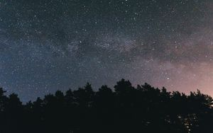 Preview wallpaper starry sky, night, trees, sky