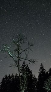 Preview wallpaper stars, night, sky, trees