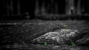 Preview wallpaper stone, flower, power of nature, germination, energy, strong
