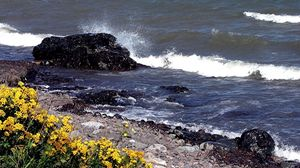 Preview wallpaper stones, coast, splashes, waves, blow, flowers
