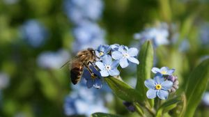 Preview wallpaper summer, flowers, bee
