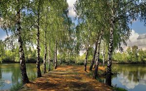 Preview wallpaper summer, pond, park, birch, landscape