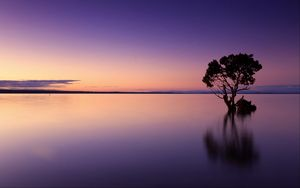 Preview wallpaper sunset, tree, lake, sky, water, evening, purple