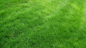 Preview wallpaper texture, grass, field, green