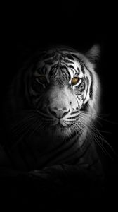 Preview wallpaper tiger, big cat, predator, glance, shadow, black and white