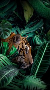 Preview wallpaper tiger, big cat, predator, jungle, wildlife