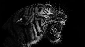 Preview wallpaper tiger, grin, art, bw, predator