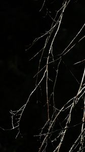 Preview wallpaper tree, branches, black