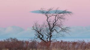 Preview wallpaper tree, horizon, minimalism, grass, clouds
