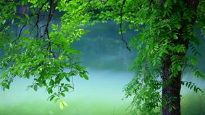 Preview wallpaper tree, leaves, summer