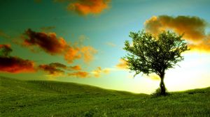 Preview wallpaper tree, lonely, meadow, clouds, colors, shadows