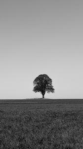 Preview wallpaper tree, minimalism, bw, horizon, field