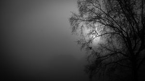 Preview wallpaper tree, silhouette, night, moon, bw