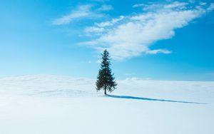 Preview wallpaper tree, snow, winter, horizon, sky