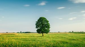 Preview wallpaper tree, summer, grass, green, field