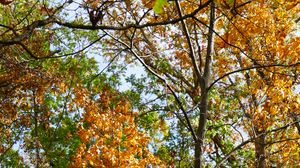 Preview wallpaper trees, autumn, branches, leaves