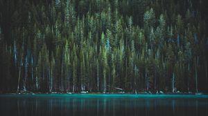 Preview wallpaper trees, lake, tenaya lake, yosemite national park, united states