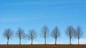 Preview wallpaper trees, minimalism, sky, horizon
