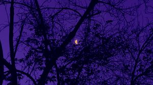 Preview wallpaper trees, the moon, night, sky, purple