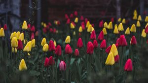 Preview wallpaper tulips, flower bed, flowers
