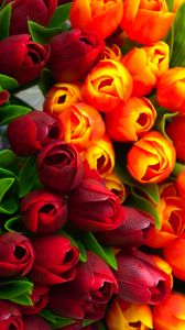 Preview wallpaper tulips, flowers, petals, red, yellow