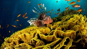Preview wallpaper underwater, fish, corals