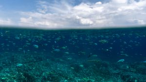 Preview wallpaper underwater world, fish, ocean