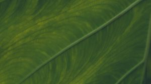 Preview wallpaper veins, leaf, macro, green, plant