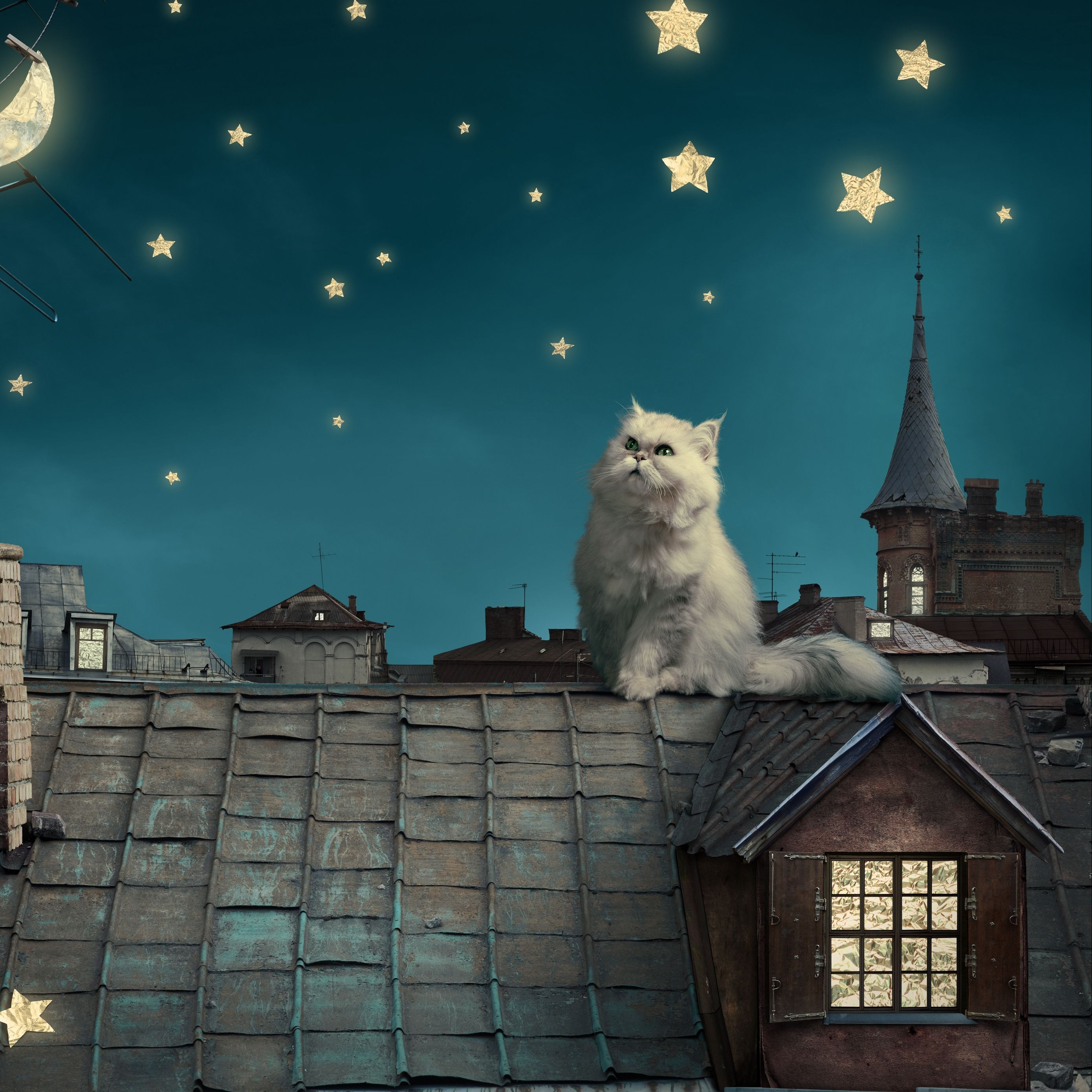 2780x2780 Wallpaper white persian cat, kitten, fairy tale, fantasy, roofs, houses, sky, night, stars, moon