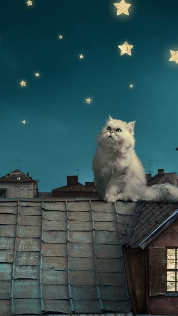 360x640 Wallpaper white persian cat, kitten, fairy tale, fantasy, roofs, houses, sky, night, stars, moon